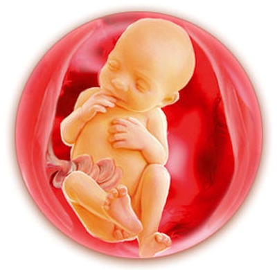 pregnancy foetus mother Pregnancy countdown is a comprehensive guide and help throughout your pregnancy the app provides weekly information about the development of the fetus and yourself plus a medically accurate illustration of fetus.