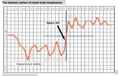 Basal body temperature during ovulation
