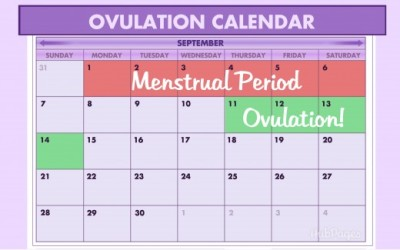 How to determine ovulation