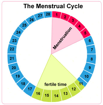 Ovulation is imminent