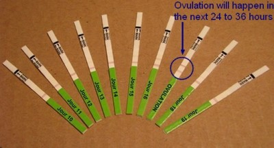 Possible test results to determine ovulation