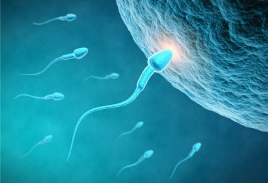 Symptoms and signs of ovulation in women