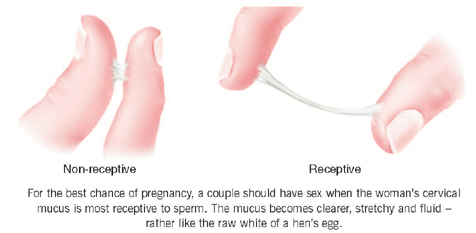 Secreted mucus during ovulation - is normal or not ...