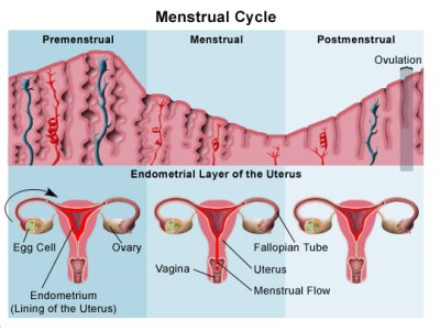 Symptoms of ovulation in women