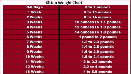 Weight gain in newborn how quickly a child should gain weight