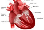 Acquired heart disease - causes, symptoms and treatment