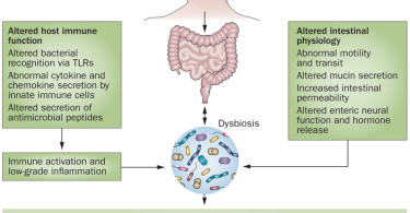 Dysbiosis of the intestine - causes, symptoms and treatment