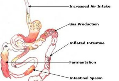 Flatulence - causes, symptoms and treatment