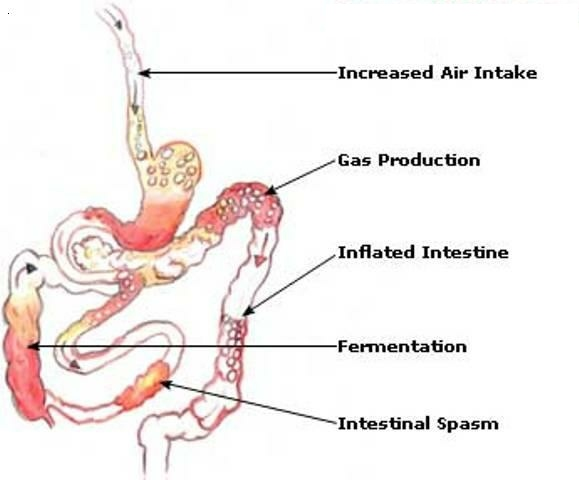 Flatulence Causes Symptoms And Treatment Health Care
