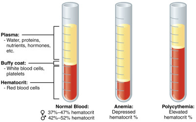 Indicators General analysis of blood from the finger