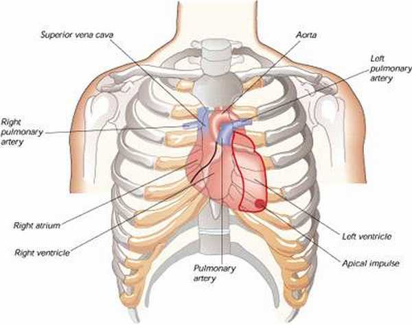 Myocardial infarction causes, symptoms and treatment of heart attack