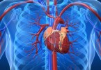 Prevention of cardiovascular diseases - risk factors cardiology