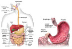Stomach ulcers - causes, symptoms and treatment