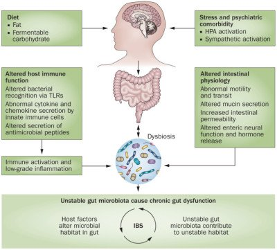Causes of intestinal dysbiosis