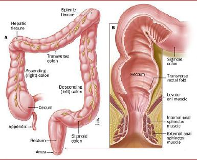 The irritable bowel syndrome