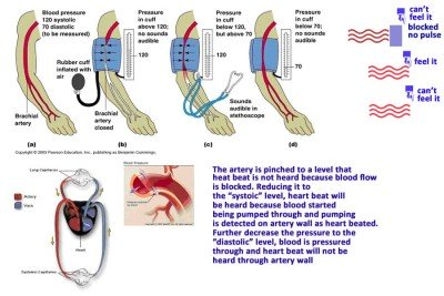 Rules of blood pressure measurement