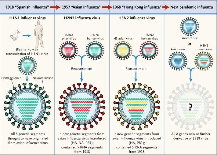 Influenza causes symptoms and treatment of flu health