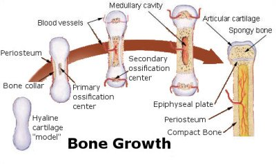 Treatment of osteoporosis