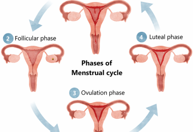 Menstruation - all menstruation cycle