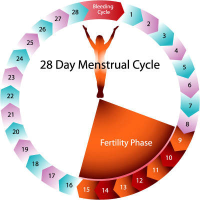 What happens during menstruation