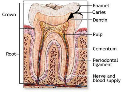 Types of toothache