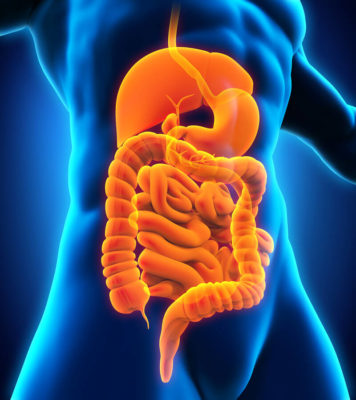 Effects of alcohol on the gastro-intestinal tract