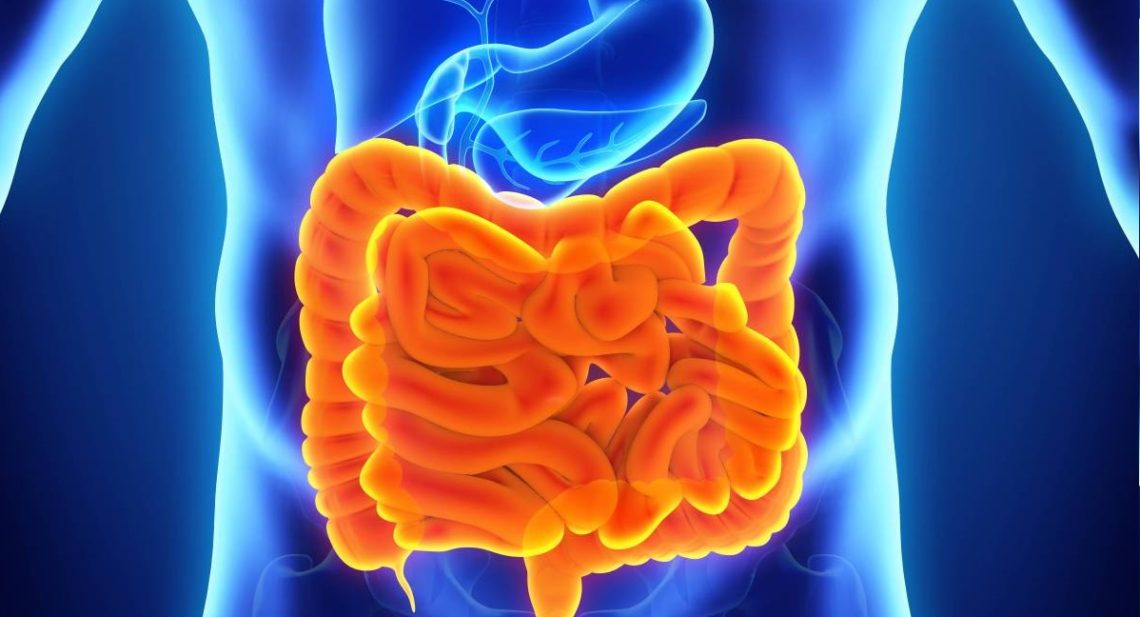 The effect of alcohol on the digestive tract