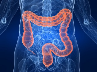 The effect of alcohol on the intestines
