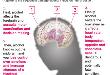 The effect of alcohol on the brain