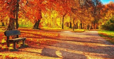 Autumn Vitamins: How To Strengthen The Immune System