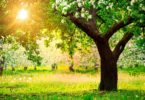Spring Vitamins: How To Strengthen The Immune System