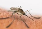 Mosquito Bites - How to Stop Itching and Treatments
